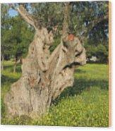 Zoomorphical Olive Wood Print