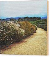 Zuma Beach Pathway Wood Print