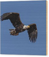 American Bald Eagle In Flight Wood Print