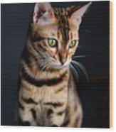 Bengal Cat Portrait Wood Print