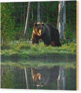 Big Brown Bear Walking Around Lake In Wood Print