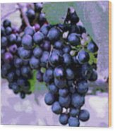 Blue Grape Bunches 7 Wood Print