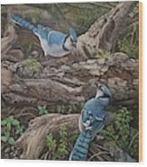 Blue Jay Stand Off Wood Print