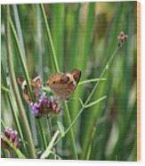 Buckeye Butterflies Wood Print