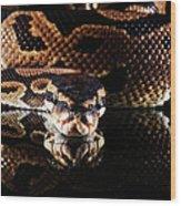 Burmese Python Wood Print