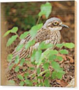 Bush Stone-curlew Wood Print