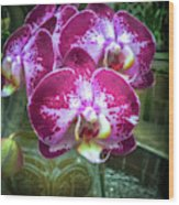 Cascade Of Orchids Wood Print