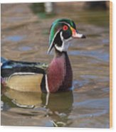 Curious Wood Duck Wood Print