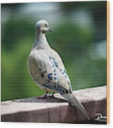 Dove On The Deck Wood Print