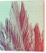 Duotone Background Of Tropical Palm Leaves Wood Print