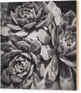 Echeveria Wood Print