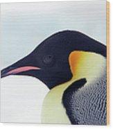 Emperor Penguin Wood Print