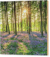 English Bluebells Wood Print