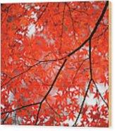 Fall Colors In Japan Wood Print