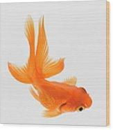 Fantail Goldfish Carassius Auratus Wood Print