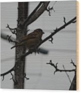 Feathered Friend Wood Print