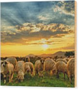 Flock Of Sheep Grazing In A Hill At Wood Print