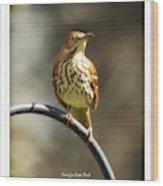 Georgia State Bird - Brown Thrasher Wood Print