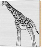 Giraffe - Ink Illustration Wood Print