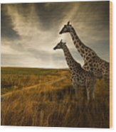Giraffes And The Landscape Wood Print