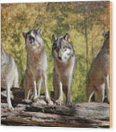 Howling Wolves Wood Print