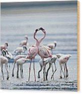 Lesser Flamingoes Phoeniconaias Minor Wood Print