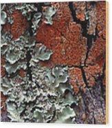 Lichen On Tree Bark Wood Print