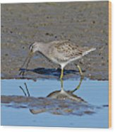 Long-billed Dowitcher Wood Print
