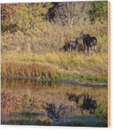 Moose At Green Pond Wood Print