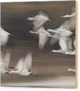 Motion Blur, Flock Of Sandhill Cranes Wood Print