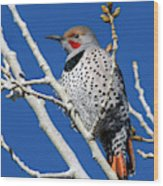 Northern Flicker Woodpecker Wood Print