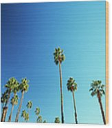 Palm Trees Against Blue Sky Wood Print