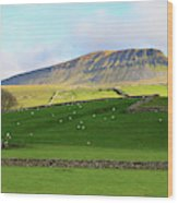 Penyghent In Yorkshire Dales National Park North Yorkshire Wood Print