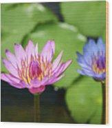 Pink Lotus Water Flower Wood Print