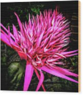 Pink Princess Bromeliad Wood Print