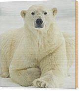 Polar Bear, Svalbard, Norway Wood Print