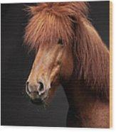 Portrait Of Horse Wood Print