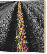 Rows Of Tulips Wood Print