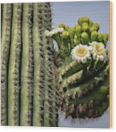 Saguaro Blooms To The Sky  Wood Print