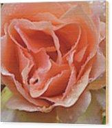 Salmon Pink Rose Wood Print