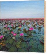 Sea Of Red Lotus , Marsh Red Lotus Wood Print
