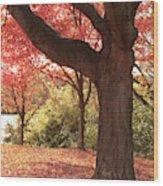 Shading Autumn Wood Print