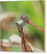 Small Beautiful Dragonfly Wood Print