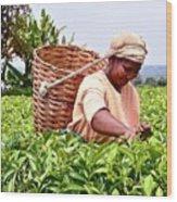 Tea Picker In Kenya Wood Print