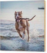 The Dog In The Water, Swim, Splash Wood Print