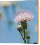 Thistle With Blue Sky Background Wood Print