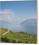 Vineyards Around Lake Leman Wood Print