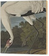 Whooping Crane  From The Birds Of America  Wood Print