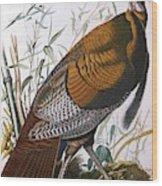 Wild Turkey  Male  Wood Print