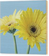 Yellow Flowers On Blue Background Wood Print